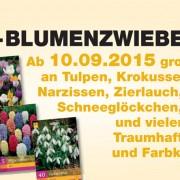 Bremer-News_Blumenzwiebeln